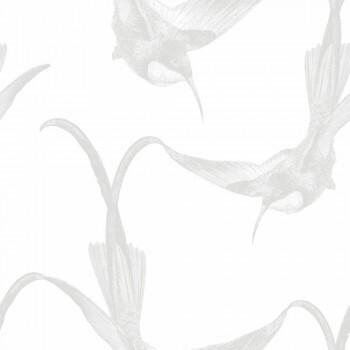 Weiß Grau Kolibri Tapete Vlies Tenue de Ville BALSAM 62-BLS200805