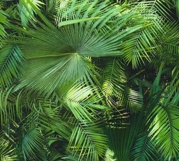 8-36200-1 362001 AS Creation Neue Bude 2.0 Vlies Tapete grün Palmenblätter