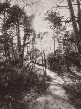 55-379100 Eijffinger Lino Wandbild Waldweg grau Vlies