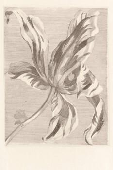 Eijffinger Masterpiece 55-358117, Vliestapete, Fototapete Blüte