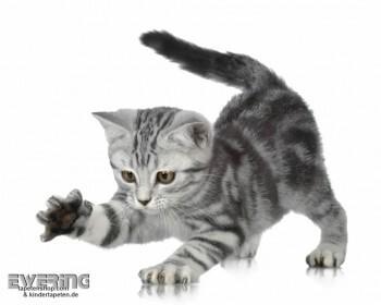 Wand-Bild Kätzchen Weiß