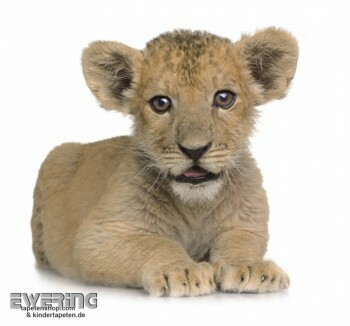 Wand-Bild Löwen-Baby Weiß