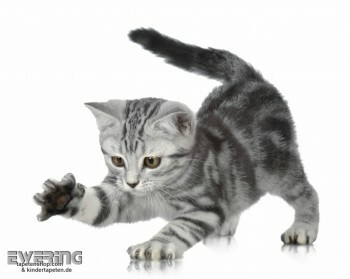 Katzen-Baby Wand-Bild Weiß